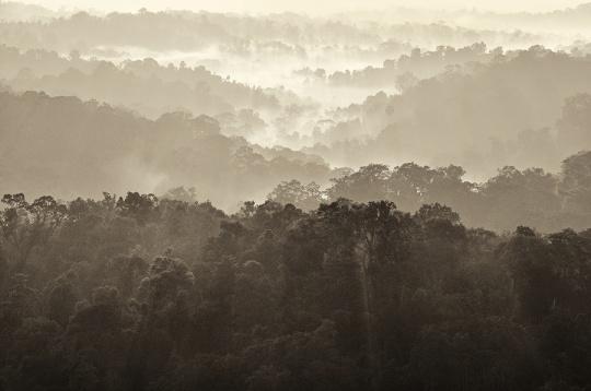 love mist