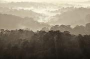 最美的风景_love mist